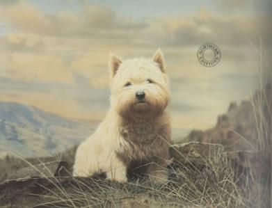 Westie - Mounted by George Pickering