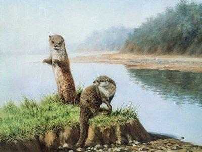 Two Otters by Ian Nathan