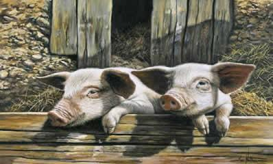 Twins - Pigs by Ian Nathan