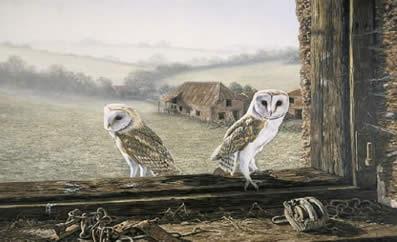 Welcome Return - Barn Owls by Ian Nathan