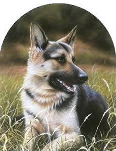Classic Breed German Shepherd by John Silver