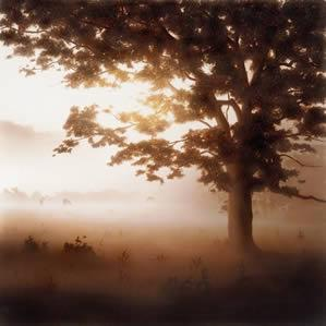 Edge Of The Woods by John Waterhouse