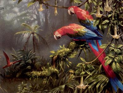 Jewels Of The Forest  - Parrots by Michael Jackson