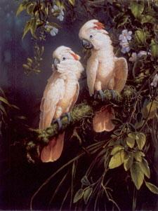 Salmon Crested Cockatoo - Parrots by Michael Jackson
