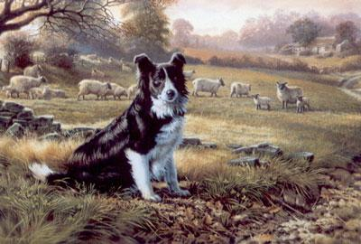Ready For Work - Border Collie by Michael Jackson