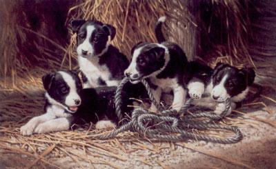 Playtime - Border Collie Puppies by Michael Jackson