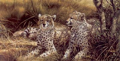 Cheetahs by Michael Jackson
