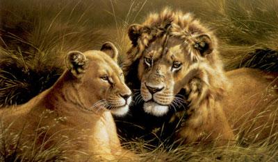 Pride Of Africa - Lion & Lioness by Michael Jackson