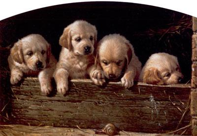 A Day At The Races - Yellow Labrador Puppies by Michael Jackson