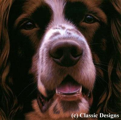 Larger Than Life - Springer Spaniel (Bc) - Box Canvas by Nigel Hemming