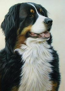 Just Dogs - Bernese Mountain Dog - Framed by Nigel Hemming